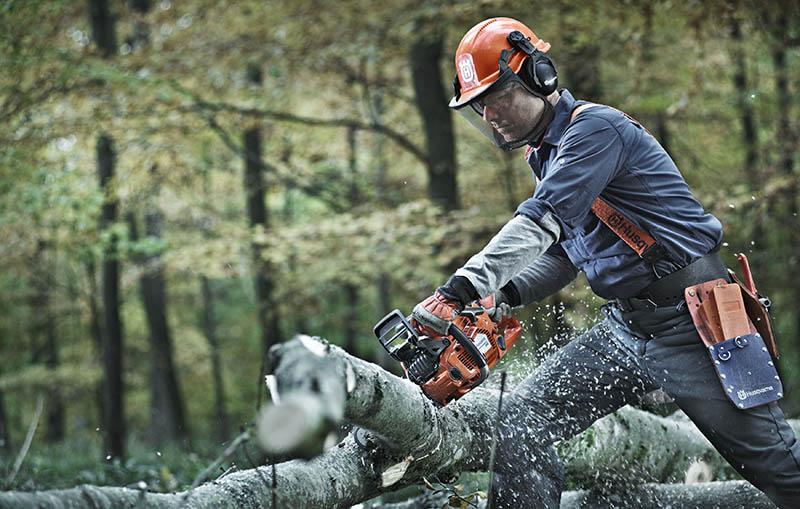 Bild på trädfällning med motorsåg